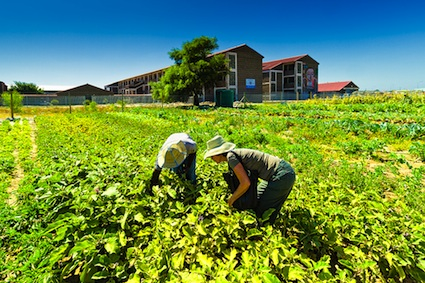 Small Business with Microfarming in the Village and City Areas